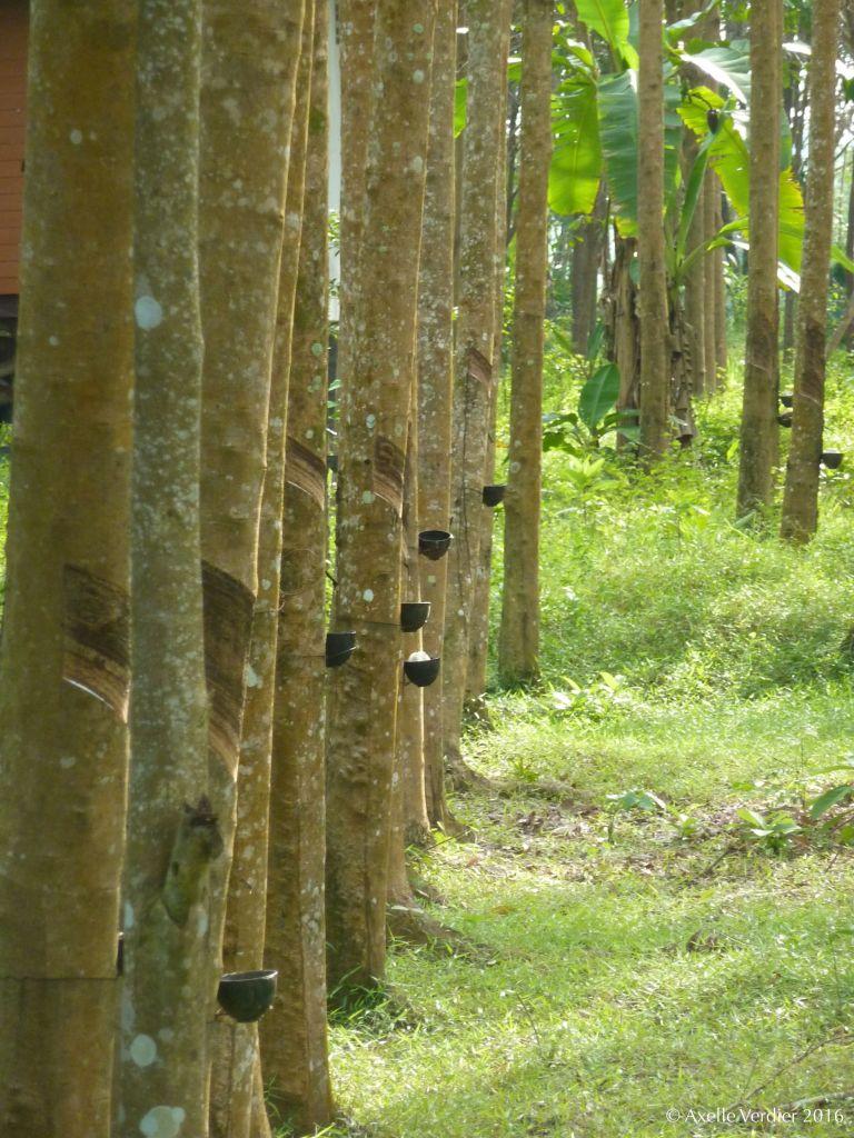 plantation2_av